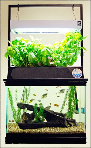 57 best mini aquaponics images on pinterest aquaponics for Fish tank hydroponic garden