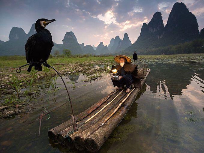 Птичья ветка, Китай
