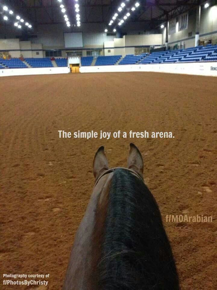 the true thoughts of a reiner! nothing better than getting to show on freshly worked dirt!:)