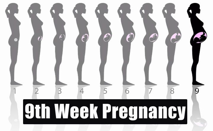 9th Week Pregnancy – Symptoms, Baby Development, Tips And Body Changes