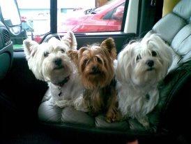 Wendy, Winnie & Luna