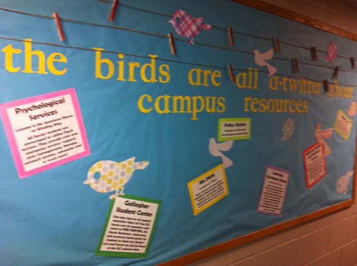 Classroom Ideas With Birds ~ Best images about classroom theme birds in the garden