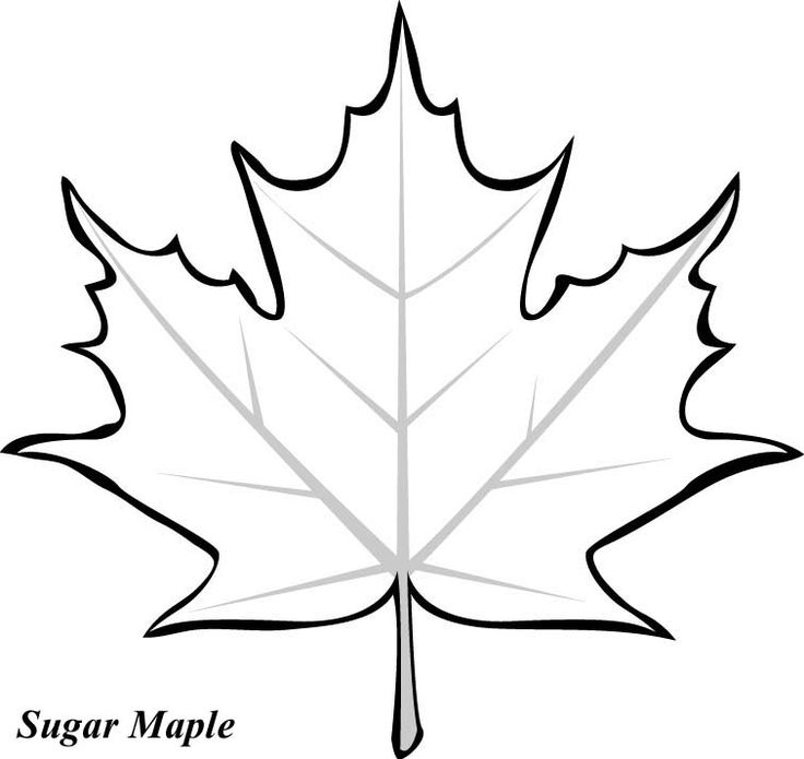 Large Leaf Coloring Page | Todayss.org