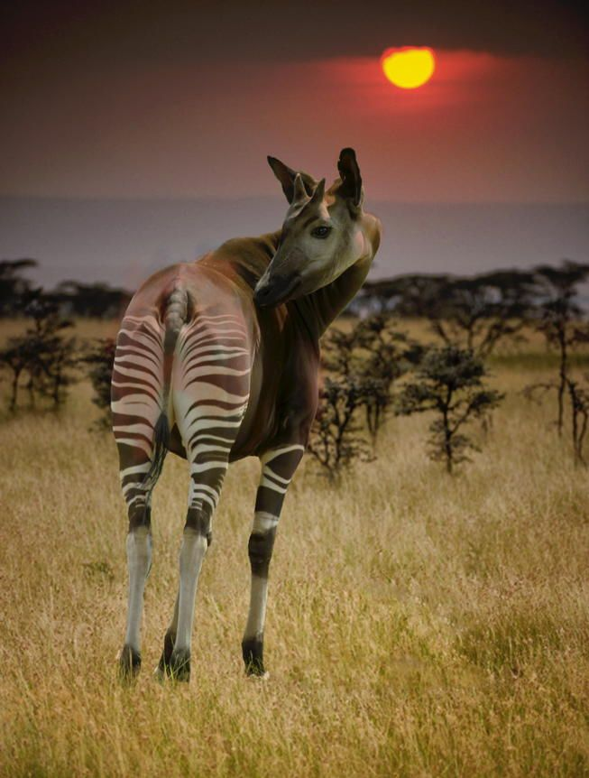 500px ISO » Stunning Photography, Incredible Stories » The 27 Most Bizarre Animals On Earth Captured On Camera