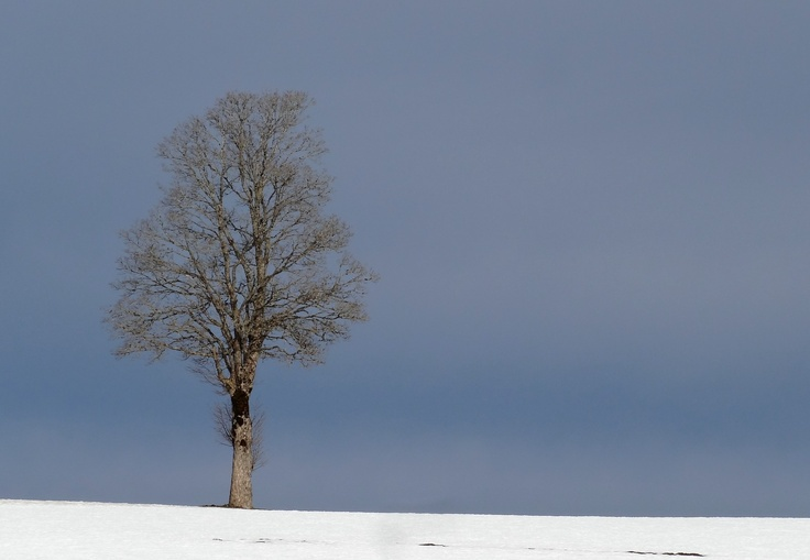 Arbre en hiver, déc 2012