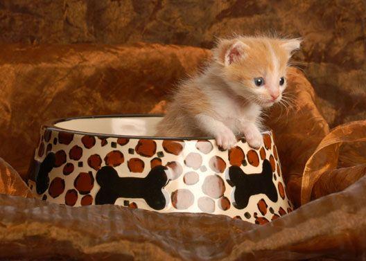 Kilka słów o miskach dla kota