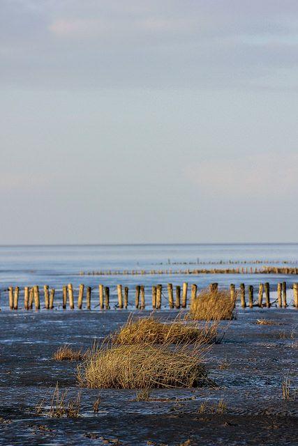 Landschaftsaufnahme im Schlick vor Friedrichskoog. - Wattenmeer, Nordsee