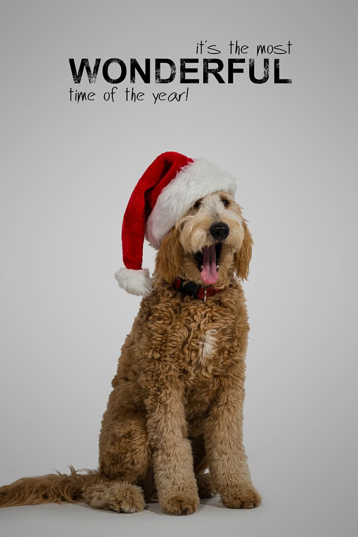 I shot this #Holiday #Card at work for our annual Holiday Card #Competition