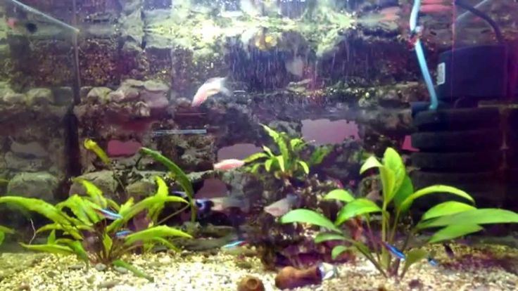 аквариум 80 литров, 3D фон сделан своими руками.