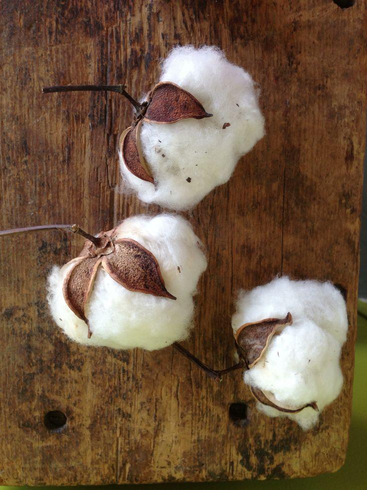 Tout savoir sur la culture et récolte du coton de l'Afrique à la France, les pays producteurs de coton, l'Inde, la Chine, ouzbekistan, Madagascar, USA.