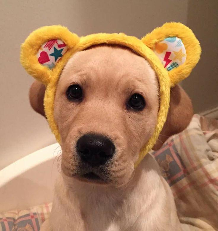 Pudsey dog !