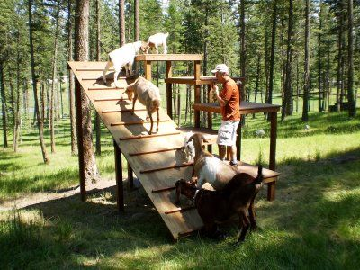 My boys need this!  They'd love it. even though its for dogs just something to jump on and off of!