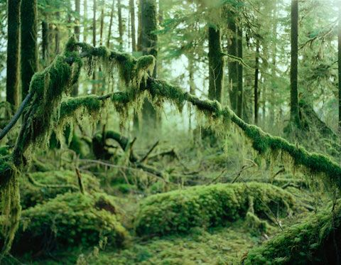 Anna-Beeke photography - the Hoh and Quinalt forests - San Juan Islands, US