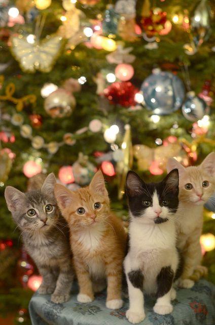 Gatti Sotto Lalbero Di Natale Gatti Cute Cats Christmas Cats