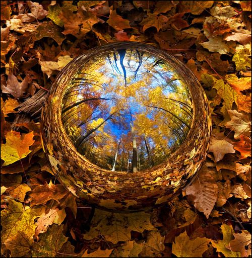 autumn leaves: Gazing Ball, Autumn Leaves, Autumn Forests, Dragon Eye, Raindrop, Autumn Trees, Water Droplets, Natural Art, Rain Drop