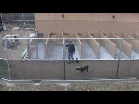 dog boarding kennel designs learn and talk about kennel buildings and structures used to