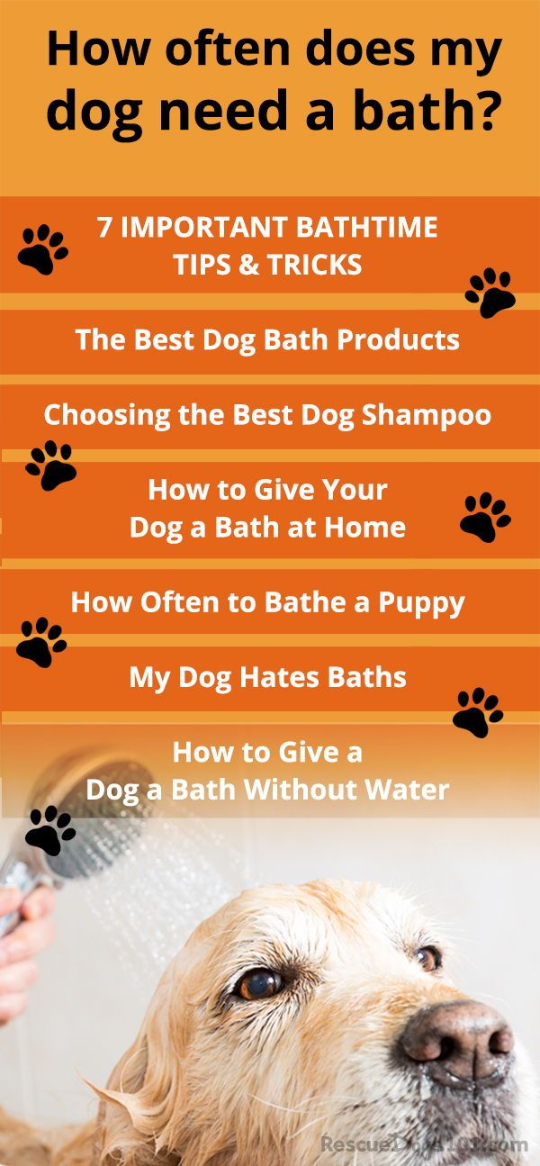 How To Bathe Your Dog In 8 Steps Infographic Dog Grooming