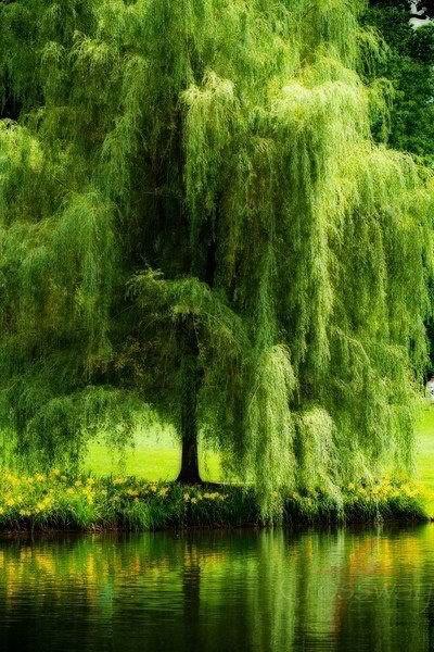 Beautiful cascades of fresh green!
