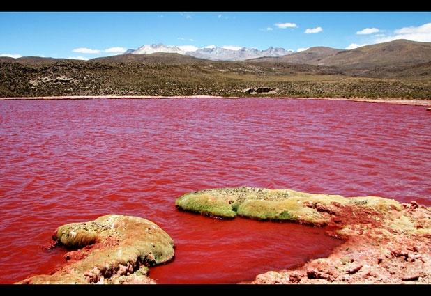 Una laguna roja como la sangre ubicada en las alturas del interior de la Región de Tarapacá, a 195 kilómetros al noreste de Iquique, Chile.