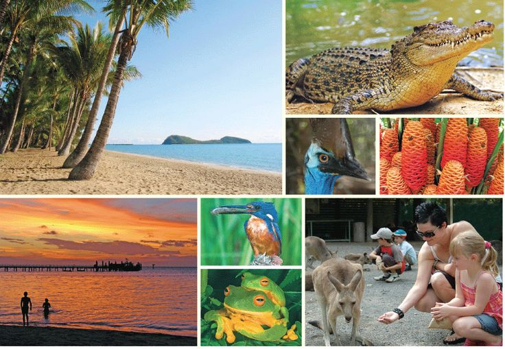 Palm Cove - Resort, Reef & Rainforest, Family Package A Taste of Palm Cove for the whole family $ 2,310  Call Us 1300 731 620 or Visit http://www.fnqapartments.com/package-palm-cove-resort-reef-rainforest-family-package/area-palm-cove/  #PalmCoveHolidayPackage