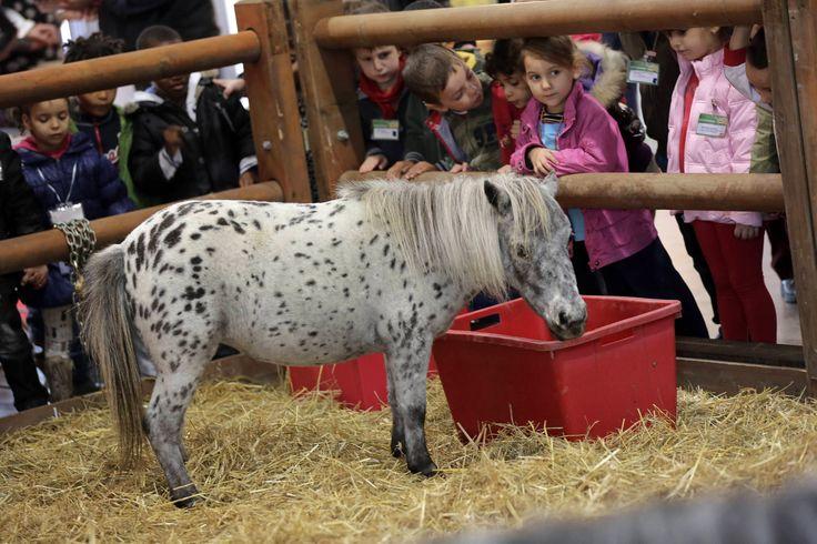 Pony #horse #kids
