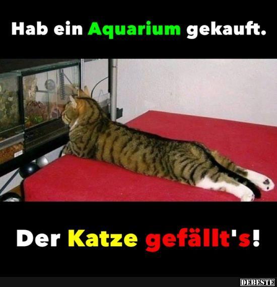 Melhores fotos, vídeos e provérbios e há diariamente novos engraçados no Facebook …   – Katzen u. andere Tiere