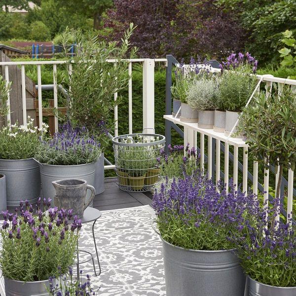Auf Terrasse Und Balkon Lässt Sich Lavandula Wunderschön In Töpfen  Arrangieren. Auch Im Kasten Können