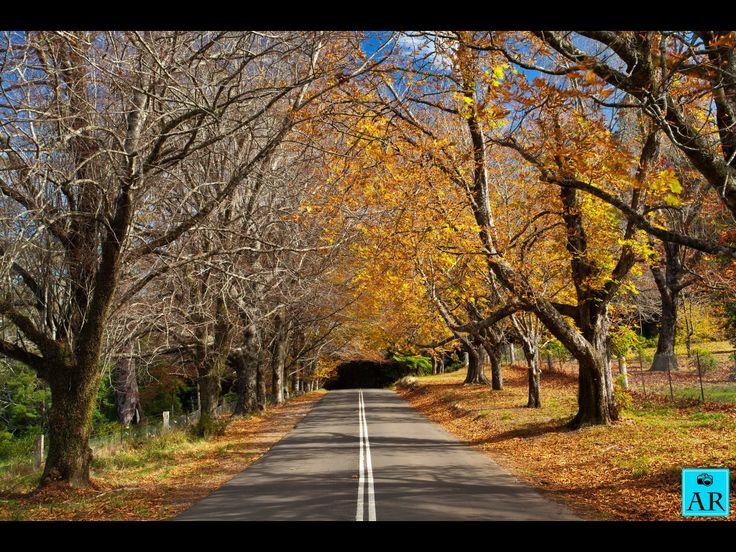 Autumn, Mount Wilson. Copyright Aaron Rusden Photography