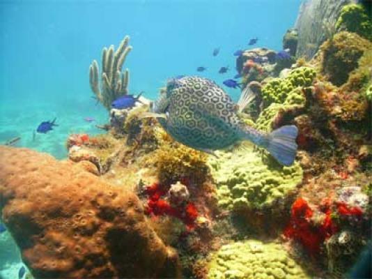 Perdido Key Snorkeling Tours