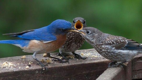 ptáci našich zahrad fotogalerie