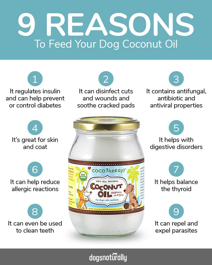 Here are 9 Reasons To Feed Your Dog Coconut Oil. There are many benefits to coconut oil just check out this handy chart! An affordable staple to any dog's diet.