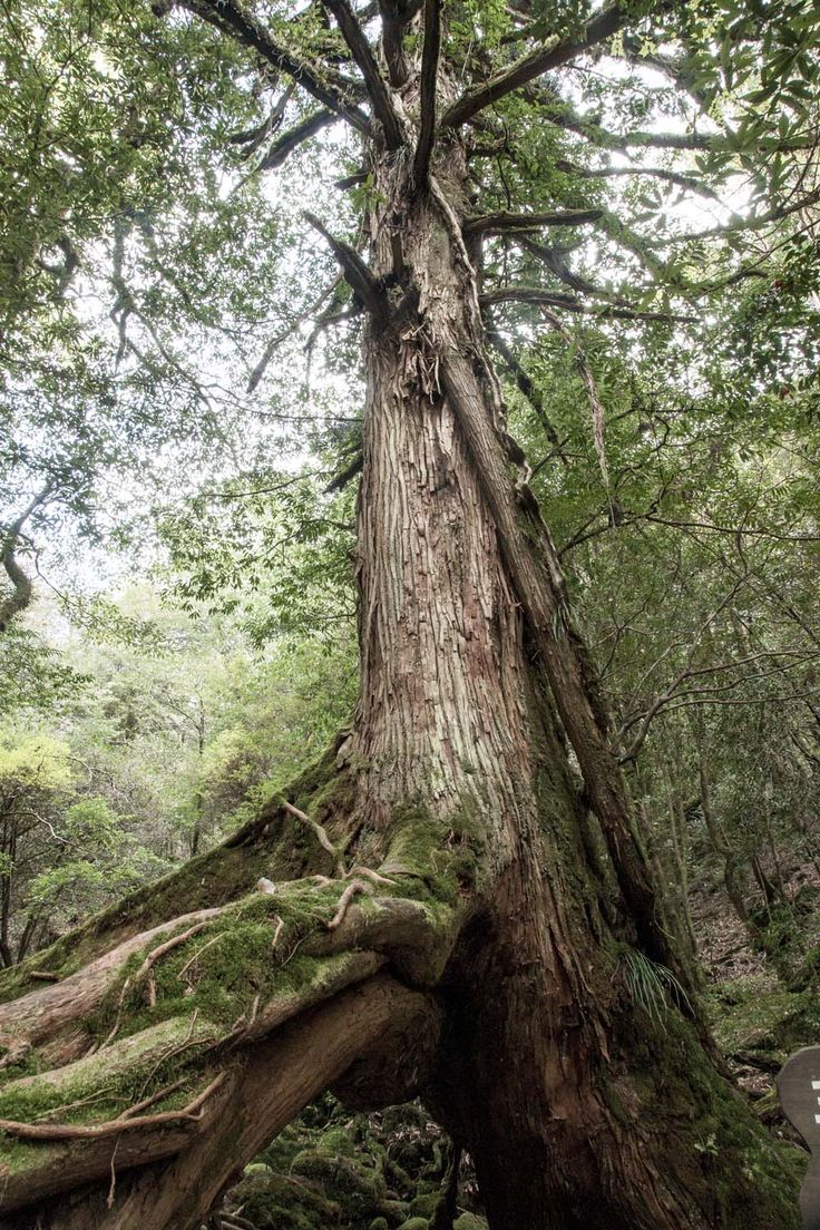 7 reasons to visit magical Yakushima - InsideJapan Blog