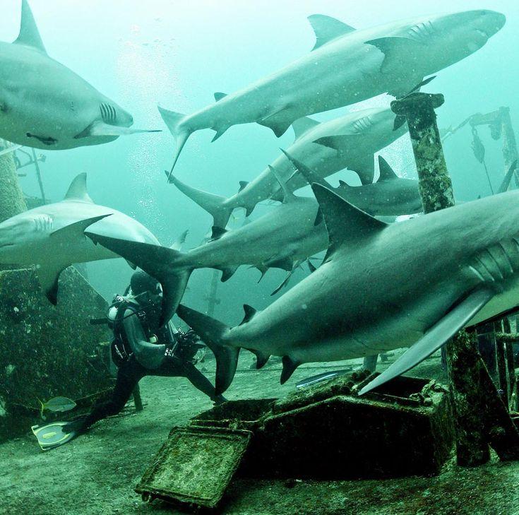 Almoçando com tubarões | Olhar Sobre o Mundo