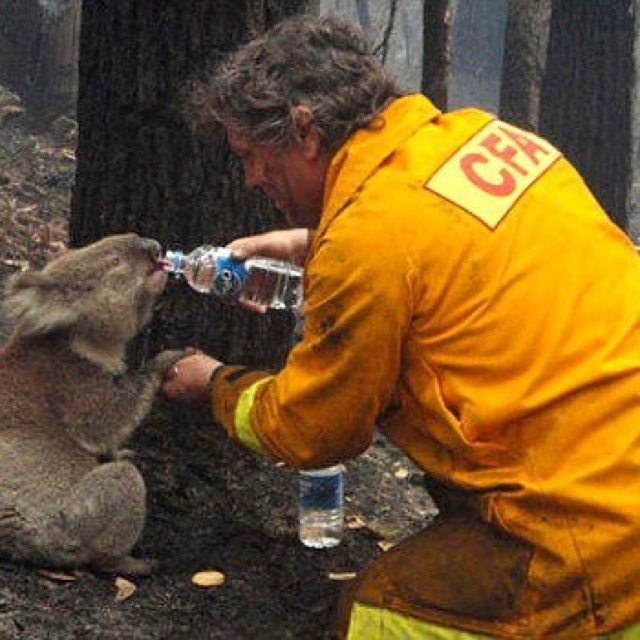 Australian firefighter,because animals need rescuing