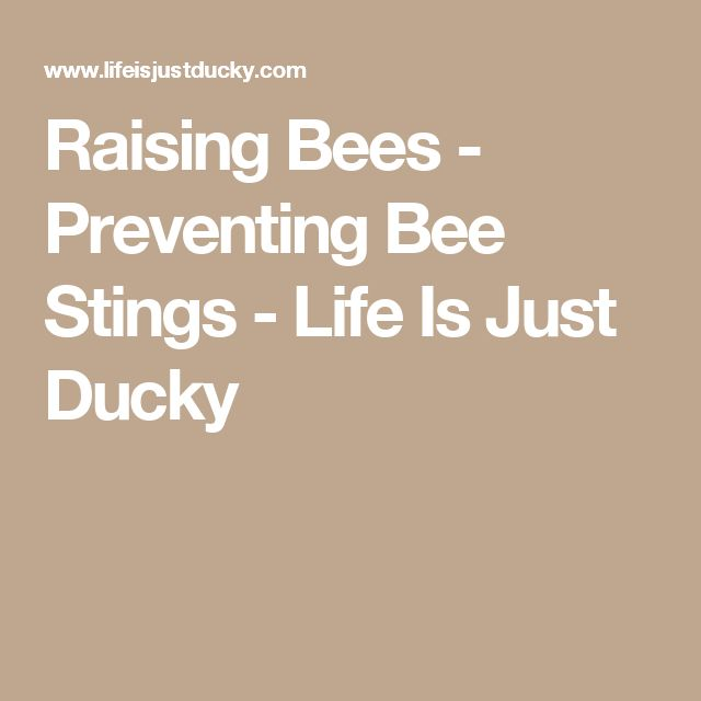 Raising Bees - Preventing Bee Stings - Life Is Just Ducky