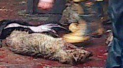 Stop dogs being beaten and killed for their skin in China https://www.change.org/p/president-xi-jinping-of-china-liu-xiaoming-chinese-ambassador-to-uk-stop-dogs-being-beaten-and-killed-for-their-skin-in-china