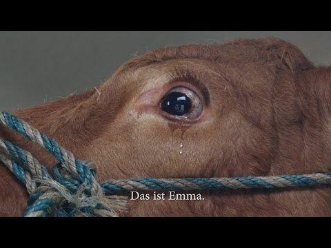 Wie mitfühlende Menschen eine weinende Kuh vor dem Schlachthaus retten. | CHILLPANDA