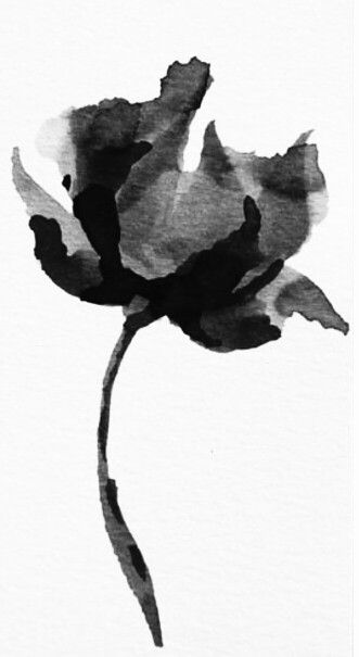 Black and White Poppy