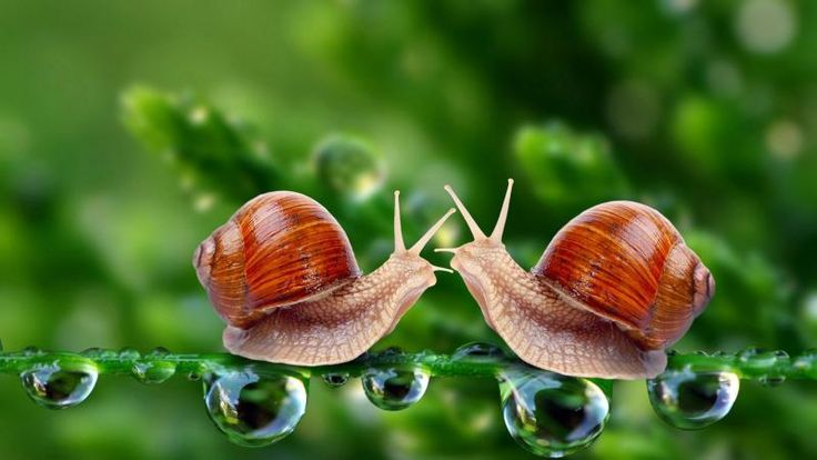 Snails Macro Drops Meeting