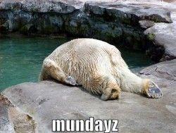 Monday... #FunnyPhotosGR #funnyphotos #funnyanimals