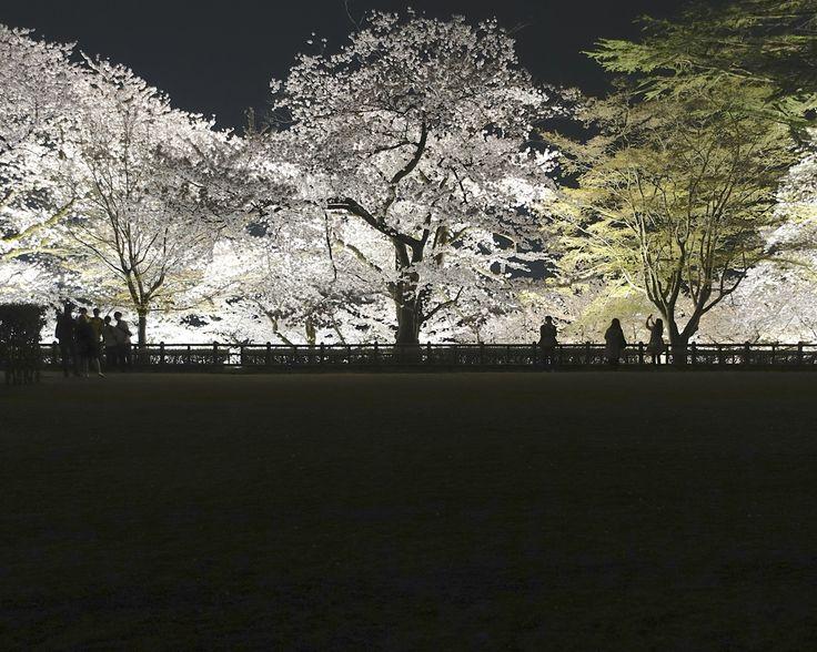 金沢城二の丸広場から、お堀の夜桜ライトアップを眺める。