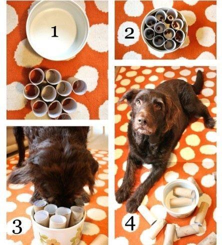 giocattoli fatti in casa per cani DogBuddy