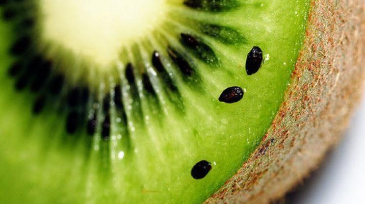 Te Puke regionen er landets største område for produktion af kiwifrugter