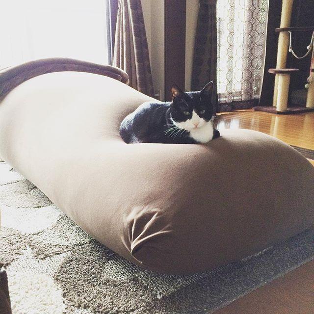 #Lami #cat #猫 #고양이 #ねこ部 #にゃんこ #pet #にゃんすたぐらむ #JapaneseBobtail #日本猫 #でぶ猫 #ハチワレ #はちわれ #白黒猫 #tuxedo #モフモフ #もふもふ #yogibo #yogiboの虜 #お気に入りの場所