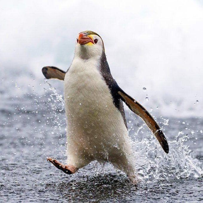 Открытки добрым, картинки пингвина прикольные