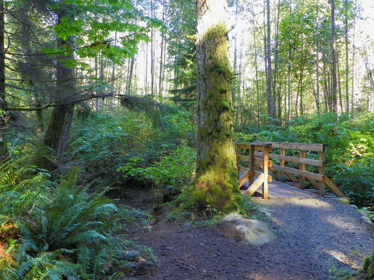 There is something to be said for a pristine forest hike, Beaver Lodge Lands, Campbell River