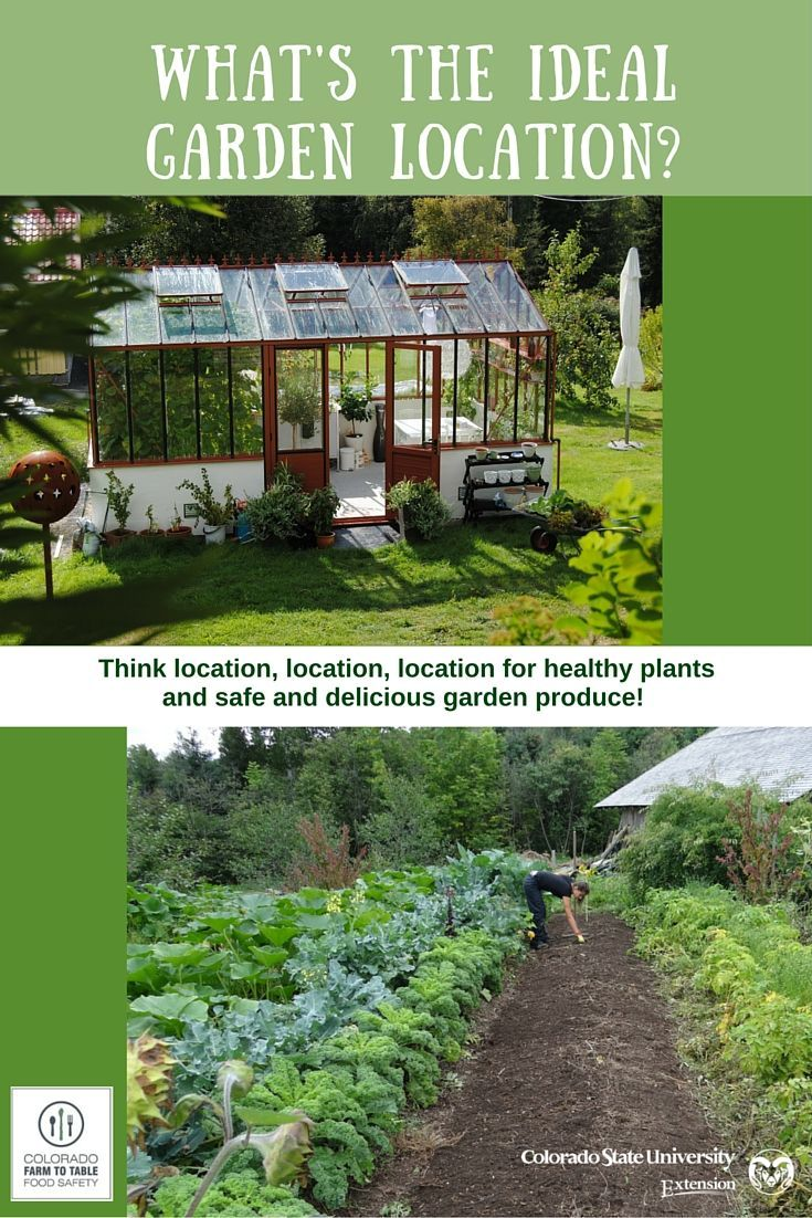 Planting a new garden this year? Be sure to select the best location for maximum productivity AND food safety!