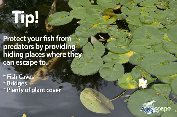 17 best images about krazy for koi on pinterest gardens for Koi pond hiding places