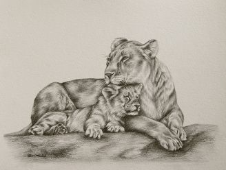 Line Drawing Of Lion : Best tattoos images drawings in pencil