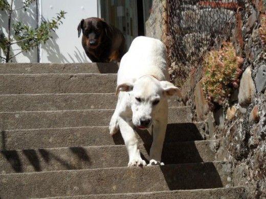 Las 25 mejores ideas sobre escaleras para perros en - Escaleras para perros ...